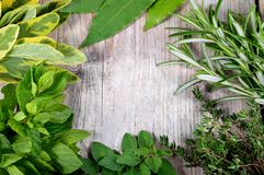 Fresh herbs frame wooden background. Stock Photo