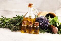 Fresh herbs from the garden and the different types of oils for massage and aromatherapy on table with lavender