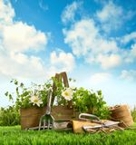 Fresh herbs with garden tools in the grass stock images