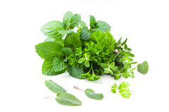 Fresh herbs from garden Stock Images