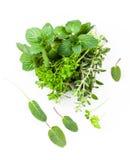 Fresh herbs from garden Stock Image