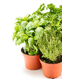 Fresh herbs in gardening pots Royalty Free Stock Photos