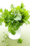 Fresh herbs in a glass Stock Images