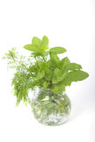 Fresh herbs in glass Stock Image