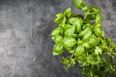 Fresh herbs on grey background stock image