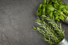Fresh herbs on grey background Royalty Free Stock Photo