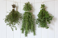 Fresh Herbs Hanging Royalty Free Stock Photos