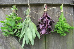 Fresh herbs hanging for drying Royalty Free Stock Photos