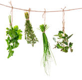 Fresh herbs hanging Royalty Free Stock Photo