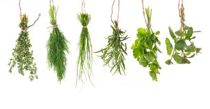 Fresh herbs hanging. Isolated on white background royalty free stock image