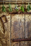Fresh herbs hanging on an old wooden door Stock Photo
