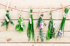 Fresh herbs hanging from pegs. Bunches of fresh herbs with name labels hanging on a line from wooden clothes pegs in a herb gardening concept Stock Photos