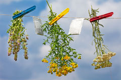 Fresh herbs hanging on a rope Royalty Free Stock Images