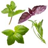 Fresh herbs isolated on white background. Fresh herbs isolated on white Stock Photo