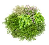 Fresh herbs isolated white background Basil rosemary thyme Top v. Fresh herbs isolated on white background. Food ingredients. Basil, rosemary, thyme. Top view Royalty Free Stock Photo