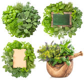 Fresh herbs isolated on white background. Big collection. Fresh herbs isolated on white background. Food ingredients. Basil, marjoram, parsley, rosemary, thyme royalty free stock photos