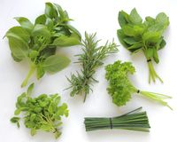 Fresh herbs isolated on white background Royalty Free Stock Image