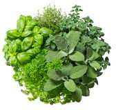 Fresh herbs isolated on white background. Food ingredients Stock Photos