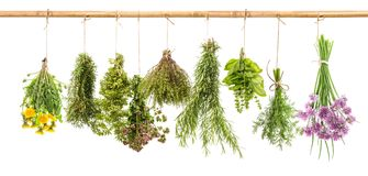 Herbs dill basil rosemary thyme chive oregano marjoram dandelion. Fresh herbs isolated on white background. Hanging bunches of dill, basil, rosemary, thyme Stock Photo