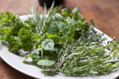 Fresh herbs in the kitchen.  Stock Images