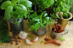 Fresh herbs in the kitchen Royalty Free Stock Photography