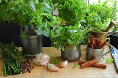 Fresh herbs in the kitchen Royalty Free Stock Image