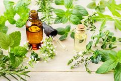 Fresh herbs, leaves, flowers and essential oil on the wooden board royalty free stock photo