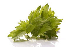 Fresh herbs. lovage Royalty Free Stock Images