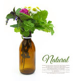 Fresh herbs in a medical bottle Stock Photo