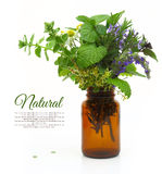 Fresh herbs in a medical bottle Stock Photography
