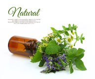 Fresh herbs in a medical bottle Royalty Free Stock Images