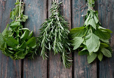 Fresh herbs. Melissa, rosemary and mint in rustic setting royalty free stock photo