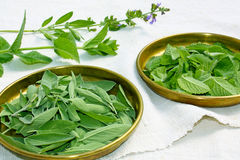 Fresh herbs mint and sage Royalty Free Stock Image