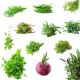 Fresh herbs necessary on the each k. Collection of fresh herbs necessary on the each kitchen Royalty Free Stock Photos