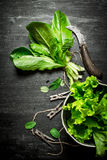 Fresh herbs with an old knife. Stock Image