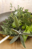 Fresh herbs in an old pan Royalty Free Stock Photography