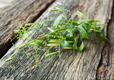 Fresh herbs on old wood. Stock Photography