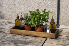 Fresh herbs and olive oil Stock Image