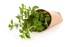 Fresh herbs oregano Stock Image