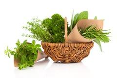 Fresh herbs oregano, rosemary, parsley and sage Stock Image