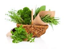 Fresh herbs oregano, rosemary, parsley and sage Royalty Free Stock Photos