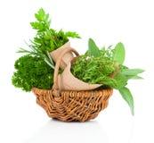 Fresh herbs oregano, rosemary, parsley and sage Stock Photos