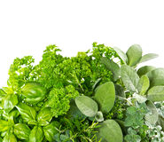 Fresh herbs over white background. Healthy food ingredients. Marjoram, parsley, basil, rosemary, thyme, sage stock photo