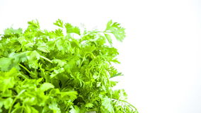 Fresh herbs parsley isolated on white stock video