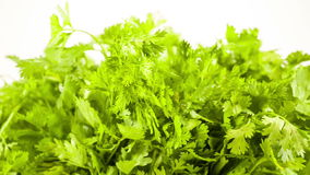 Fresh herbs parsley isolated on white stock footage