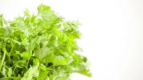 Fresh herbs parsley isolated on white Royalty Free Stock Images