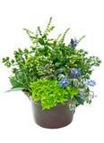 Fresh herbs in plant pot stock photos