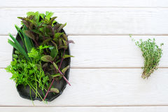 Fresh herbs on plate and thyme flat lay copyspace Stock Images