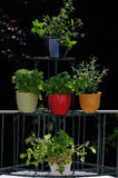 Fresh herbs in pots. Fresh herbs  in pots on a balcony Royalty Free Stock Photography