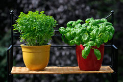 Fresh herbs in pots. Fresh herbs  in pots on a balcony Stock Images